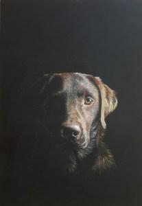 Jenny Urquhart chocolate labrador portrait