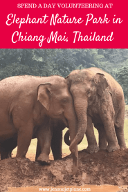 Looking for the best elephant sanctuary in Chiang Mai, Thailand? Elephant Nature Park is a highly awarded rescue where the focus is on the elephants not the visitors. Their mission is to end the practice of riding and exploiting elephants by educating the public. Save to your travel board for inspiration. #elephantnaturepark #elephantnatureparkchiangmai #elephantnatureparkthai