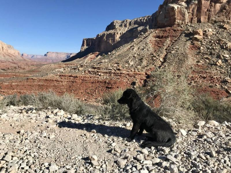 Dog on the Havasu Falls Hike
