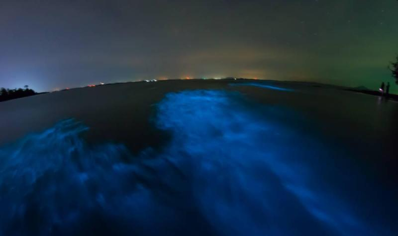 Blue-green glow of Vieques Bioluminescent Bay
