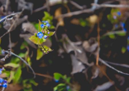 Week-13-Day-89-Flowers-17