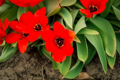 Week-13-Day-89-Flowers-2