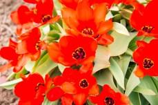 Week-13-Day-89-Flowers