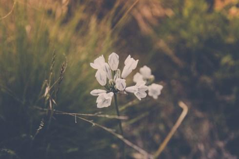 Week-18-Day-130-5-10-Flower-5