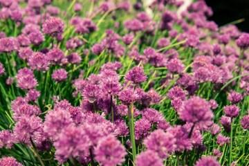 Week-21-Day-145-5-25-Moms-Garden-12