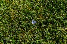 Week-24-Day-172-6-21-Butterfly