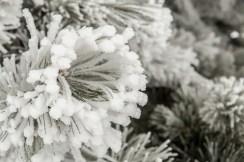 Todays-Photo-12-1-15-Frosty-Frost-4