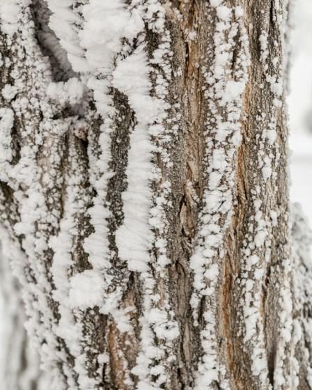 Todays-Photo-12-1-15-Frosty-Frost-7