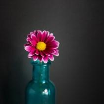 Flowers-1-26-16-5