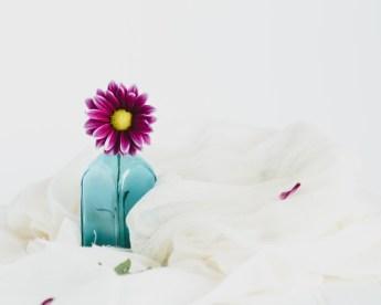 Flowers-1-29-16-5