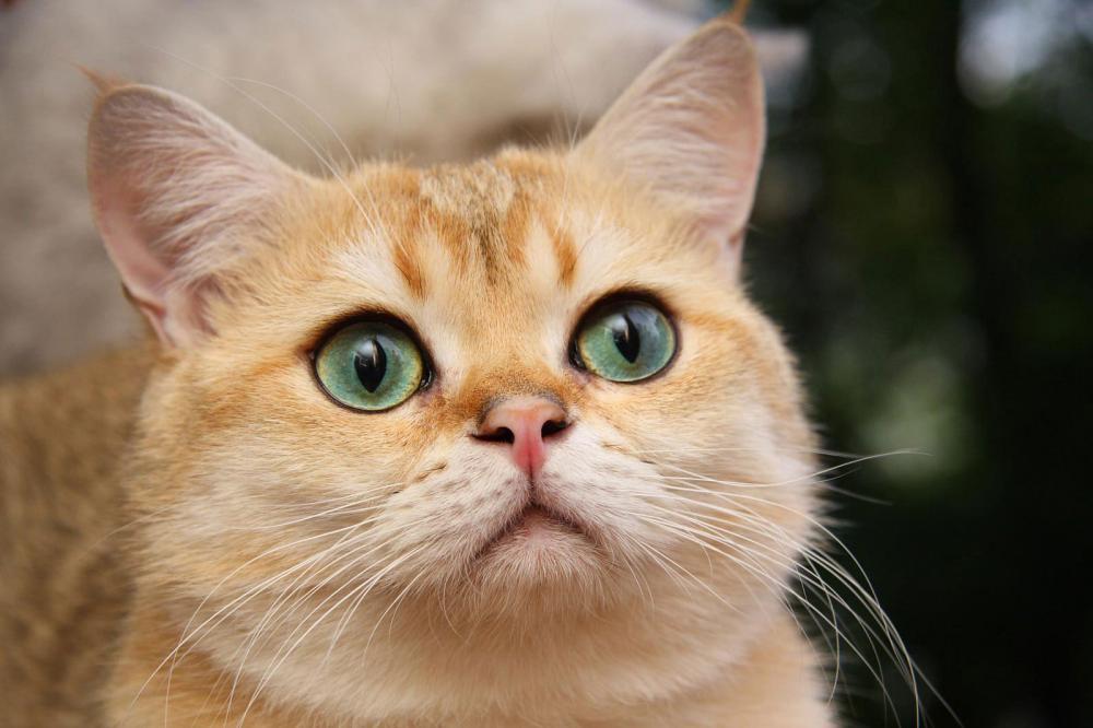 У кошки кровь в кале при хпн и мкб причины и лечение