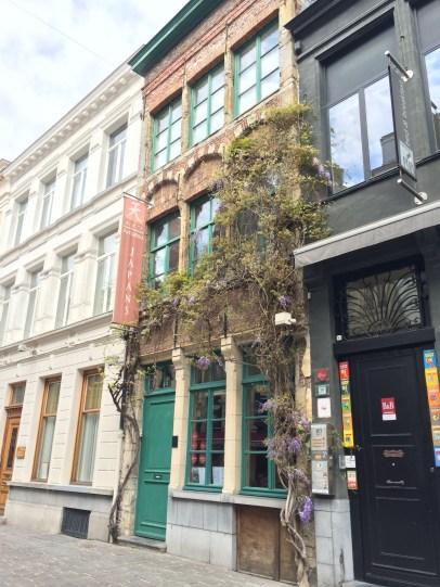 Beautiful ivy climbing the building
