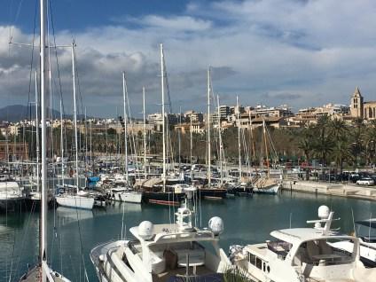 Palma's expansive marina