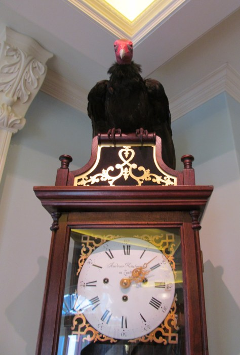 Club 33 Vulture - Photo Courtesy of David and Vy Spear.