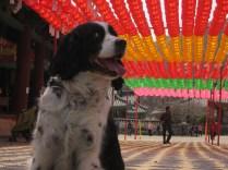 Remi explores Buddhism