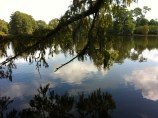 Swan Lake in Sumter