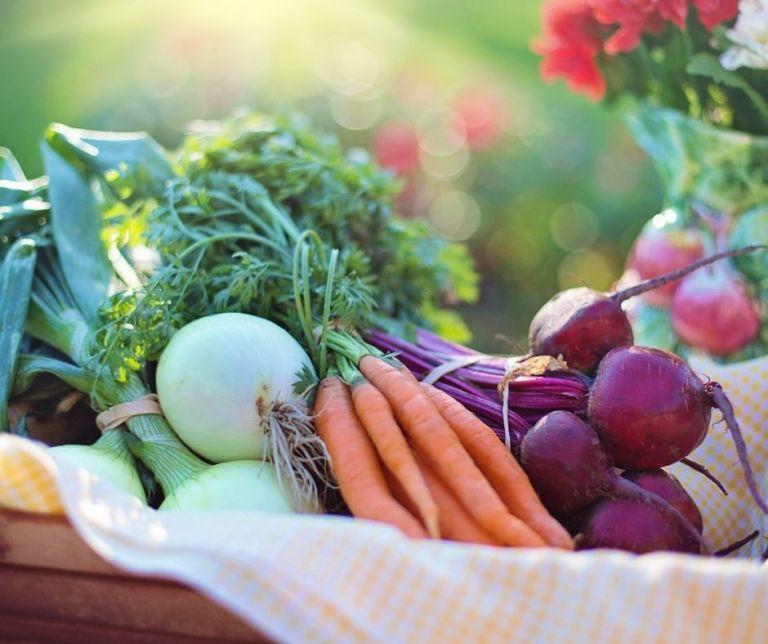 Les noms des légumes en provençal (de Ail à Haricots verts)