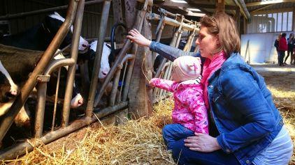 Feeding cows with Mum