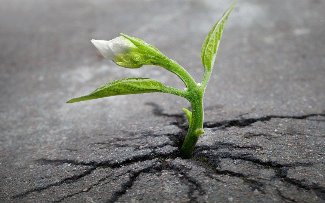 September 8, 2016 – Everyday We Grow