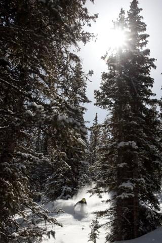 winterPrints10-11-46