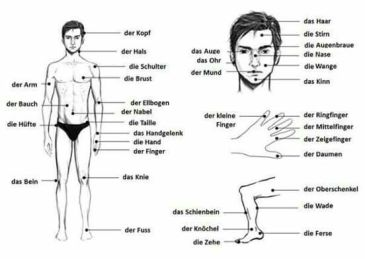 Parts of the body in German