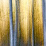 Berkenstammen in een omgeving die geel kleurt door de berkenbladeren in de herfst. Het tafereel is gefotografeerd met een lange sluitertijd terwijl de camera verticaal bewoog. Dit levert een vaagheid op, die resulteert in een grafisch beeld van lichte strepen (de berkenstammen) in een gelige achtergrond waarin ook wat zijtakjes van de bomen te zien zijn.