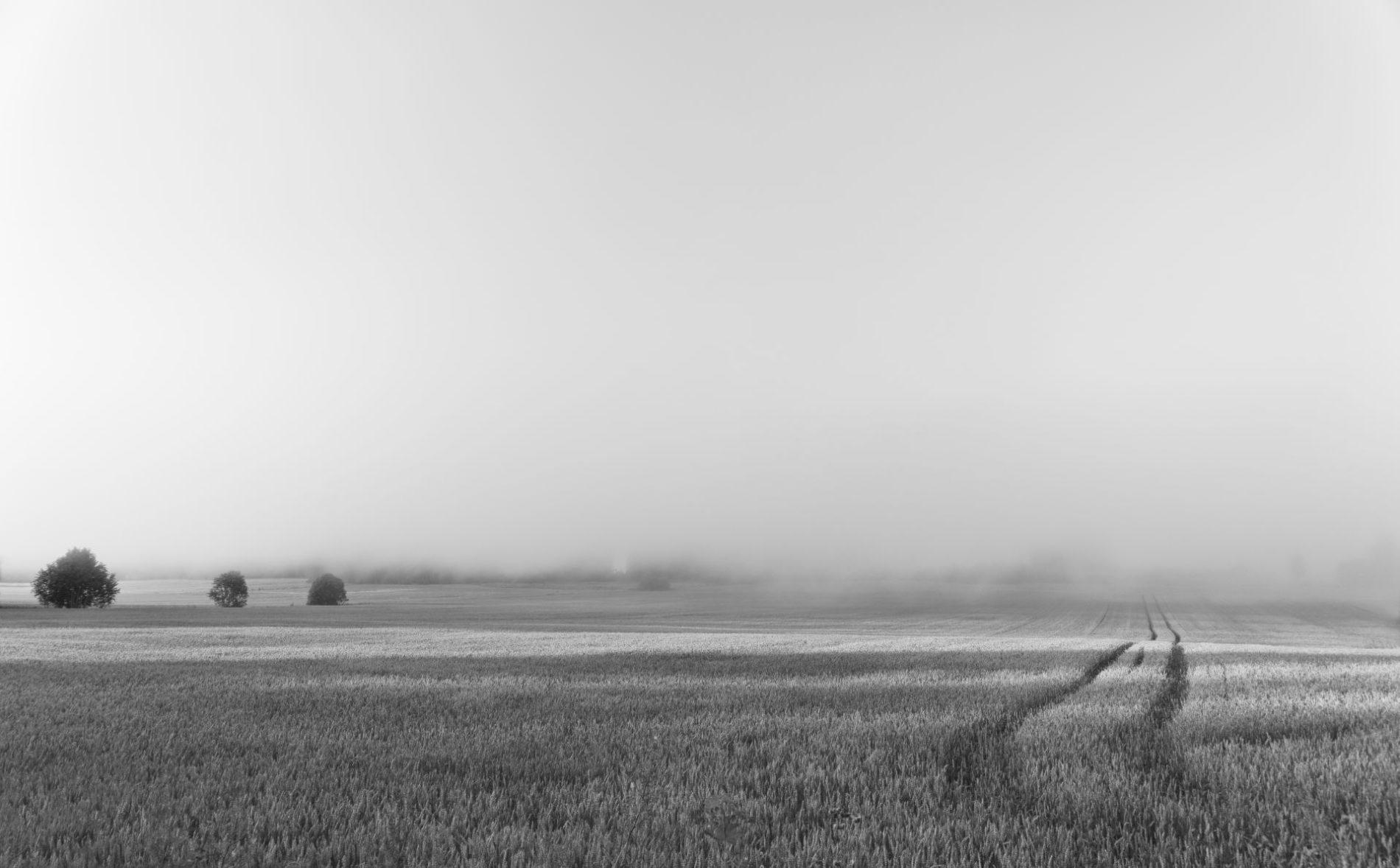 Landscape with fog