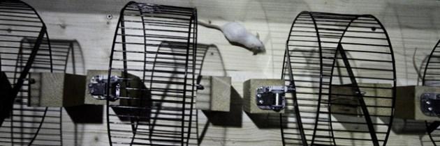 Musica da Camera: muizen maken muziek