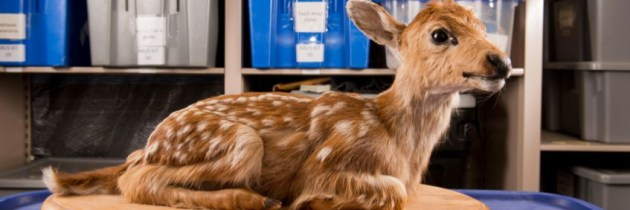 Leen een opgezette Bambi of Harry Potter-uil bij de bieb