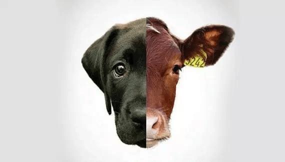speciesisme