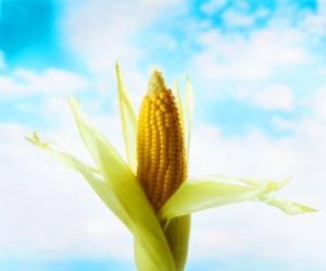 Corn-Keyvive