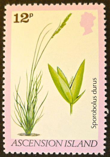 Ascension Island - endemic flora - Sporobolus durus