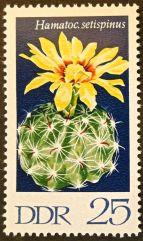 East Germany - flowers - Hamatocactus setispinus