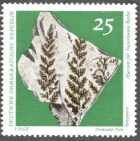 East Germany, fossil ferns - Botryopteris sp.