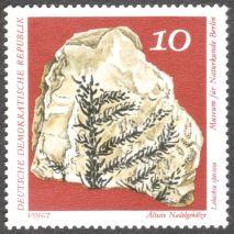East Germany, fossil ferns, Lebachia speciosa