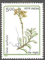 India, orchids, Vanda spathulata, 1991