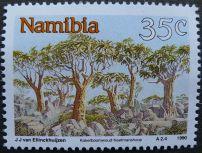 Namibia: Tree Aloes, 1990. Probably Aloe bainesii
