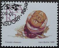 South Africa, Crassula columnaris, 1988
