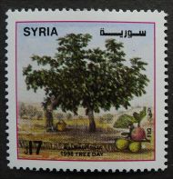 Syria, Tree Day, Fig, 1998