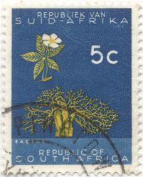 South Africa - African Baobab, Adansonia digitata