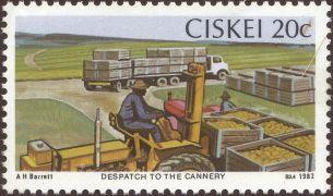 Ciskei - Ananas comosus - despatching pineapples