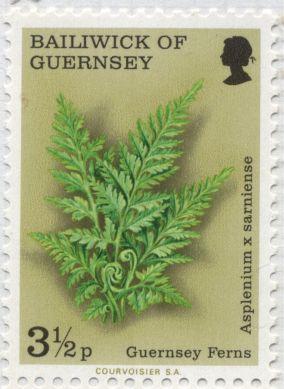 Guernsey - Asplenium x sarniense