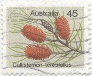 Australia - Callistemon teretifolius, bottlebrush