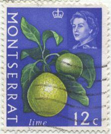Montserrat - Citrus x limonia, the Rangpur or lemandarin, a bitter hybrid between lemon and mandarin