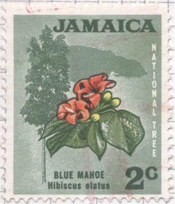 Jamaica - Hibiscus elatus, Blue Mahoe - National Tree