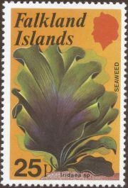 Falkland Islands - Iridaea species, seaweed