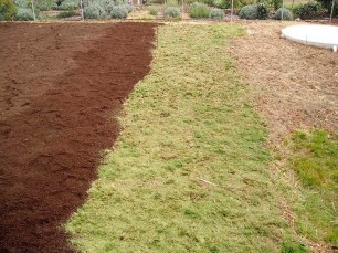 The green manure and sandwich mulch process (see garden development) broke up the soil, added organic matter and turned it into an absorbent sponge.