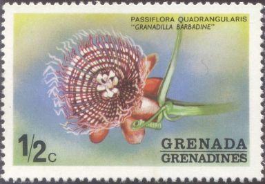Grenada & the Grenadines - Passiflora quadrangularis, Granadilla