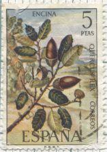 Spain - Quercus ilex, Holm oak