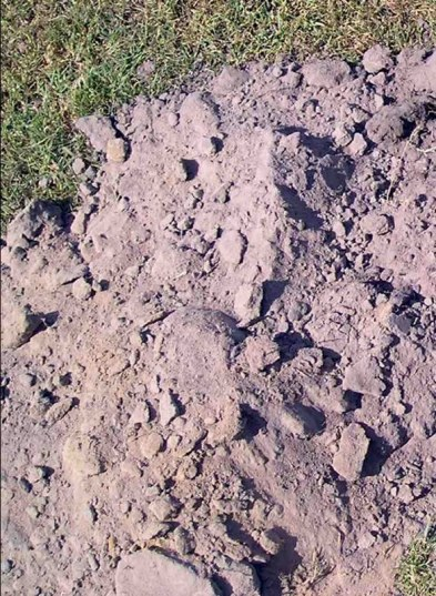 subsoil 400 - 600mm deep - less humus